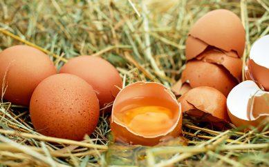 Proteine delle uova, un'ottima fonte per gli sportivi